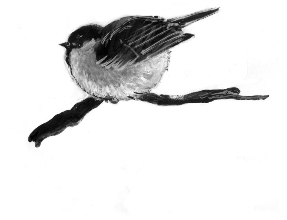 nahohlivshayasya-ptichka